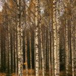 Z. Kuszlewicz: Utworzenie spółki akcyjnej na bazie Lasów Państwowych ma być początkiem rozbiórki państwowego przedsiębiorstwa