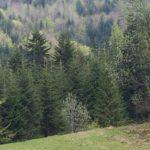 Lasy Państwowe, pod wpływem nacisków społecznych, nie wejdą do spółki Polskie Domy Drewniane [WIDEO]